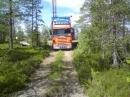 skogsmulle i norrland